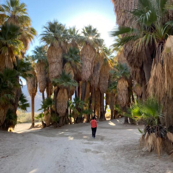 Travelogue – Palm Springs Modernism Week